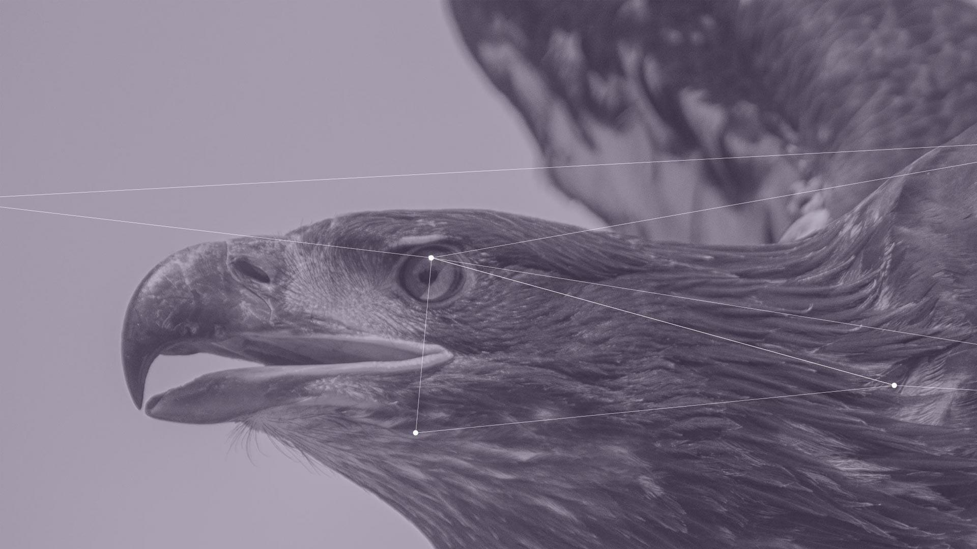 matterhorn branding eagle