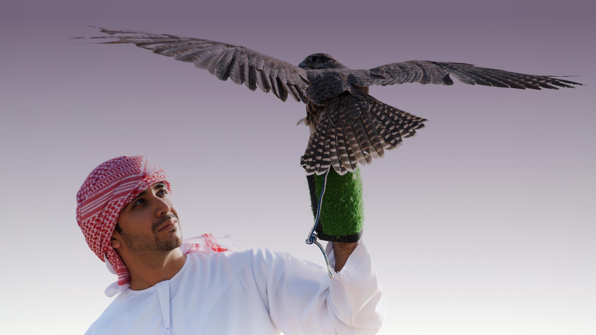 matterhorn branding falcon